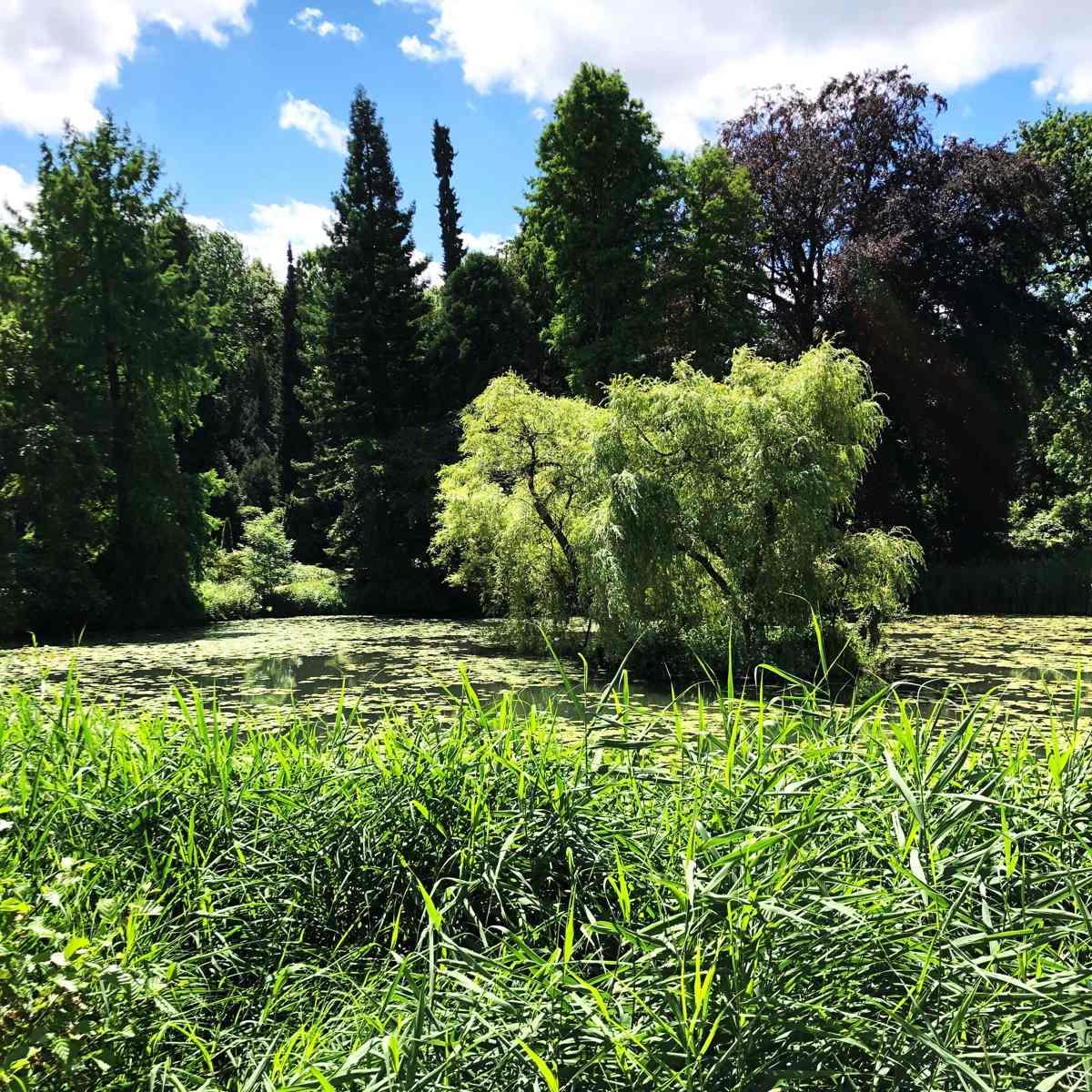 Gartenteiche im Garten